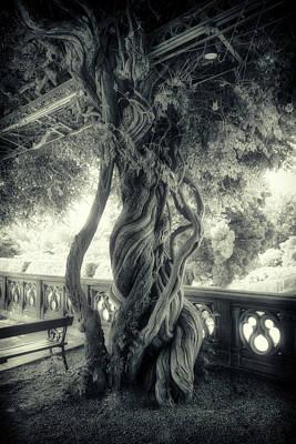 Photograph - Tree Trunk Bw Series Y6693 by Carlos Diaz