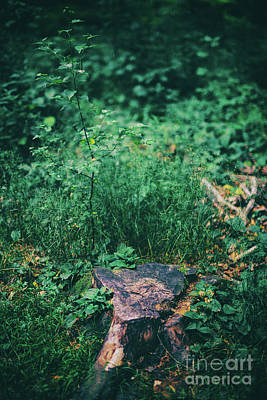 Photograph - Tree Trunk In Green Bushes In The Forest. by Michal Bednarek