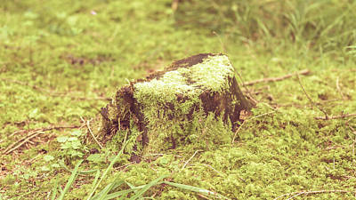 Photograph - Tree Trunk Moss Stump B by Jacek Wojnarowski