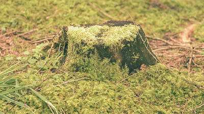Photograph - Tree Trunk Moss Stump C by Jacek Wojnarowski