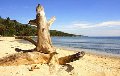 Photograph - Tree Trunk On Beach by Christopher Shellhammer
