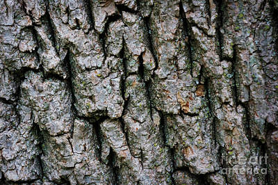Landscapes Royalty-Free and Rights-Managed Images - Tree trunk pattern by Celestial Images