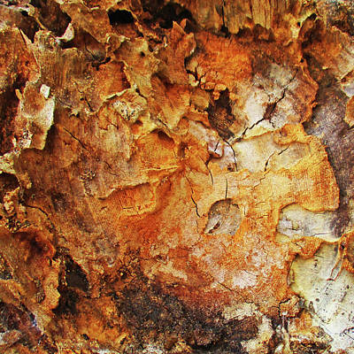 Photograph - Tree Trunk Square by Randall Weidner