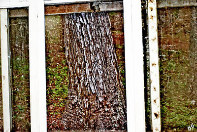 Photograph - Tree Trunk Through A Screened Window by Gina O'Brien