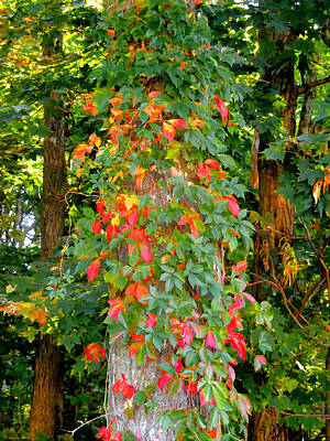 Tree Trunk With Virginia Creeper 7 Art Print by Lanjee Chee