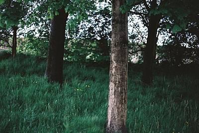 Tree Trunks Art Print