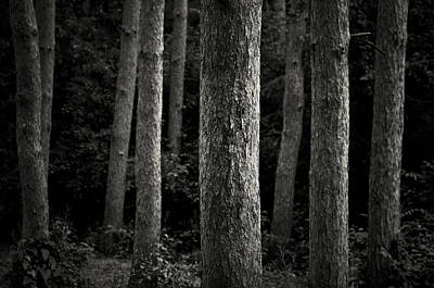 Ann Arbor Photograph - Tree Trunks by Image By Marc Gutierrez