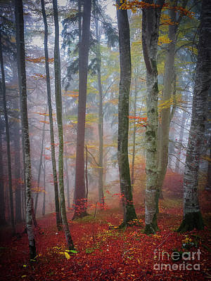 Photograph - Tree Trunks In Fog by Elena Elisseeva