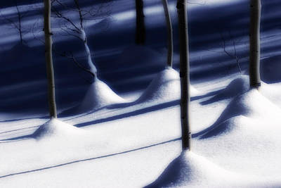 Photograph - Tree Trunks In Snow by Douglas Pulsipher