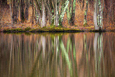 Photograph - Tree Trunks Reflecting by Karol Livote