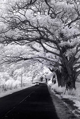 Infra-red Photograph - Tree Tube - Vert by Sean Davey