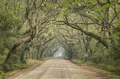 Photograph - Tree Tunnel by Denise Bush