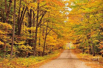 Forest Photograph - Tree Tunnel On A Country Road by Terri Gostola