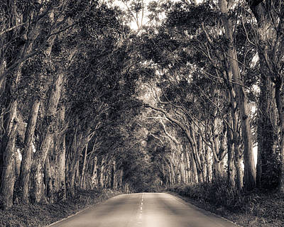 Tree Tunnel Art Print by Robert  FERD Frank