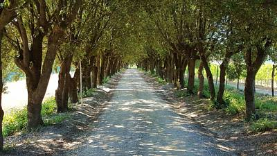 Photograph - Tree Tunnel by Valentino Visentini