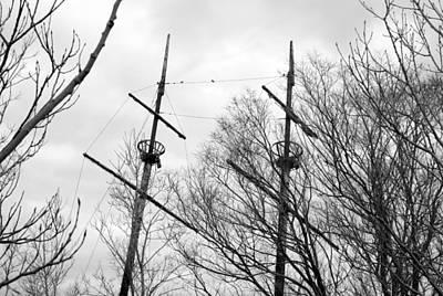 Photograph - Tree Types by Valentino Visentini