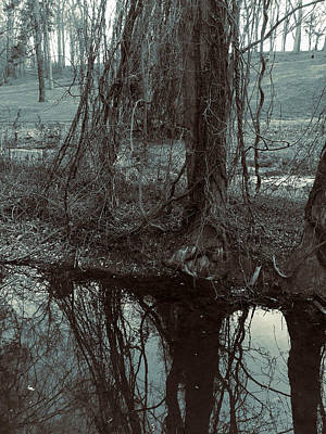Photograph - Tree Vines Water by Robert G Kernodle