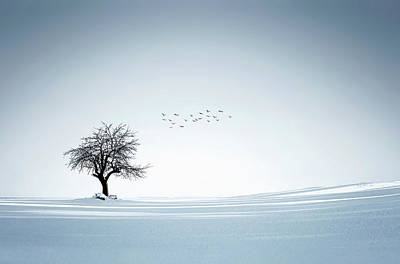 Dramatic Digital Art - Tree Winter by Bess Hamiti