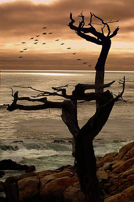 Photograph - Tree With Birds  by Harry Spitz