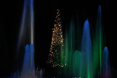 Photograph - Tree With Blue And Green by Jacqueline M Lewis