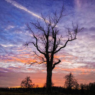 Bare Trees Photograph - Tree With Blue And Orange Sky At Sunrise by Matthias Hauser