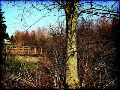 Photograph - Tree With Bridge by Joan  Minchak