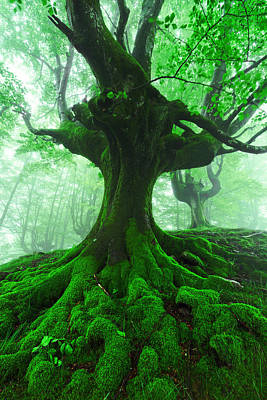 Tree With Twisted Roots In Foggy Forest Art Print by Mikel Martinez de Osaba