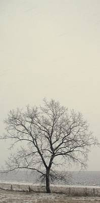 Photograph - Tree#1 by Susan Crossman Buscho
