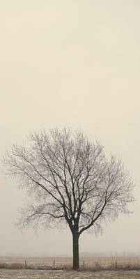 Photograph - Tree#2 by Susan Crossman Buscho