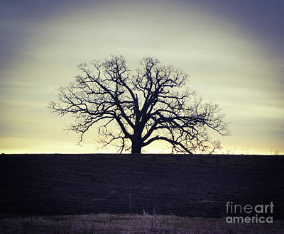 Photograph - Tree5 by Catherine Hill