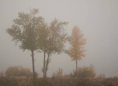 Photograph - Trees In Fog by Mick Burkey