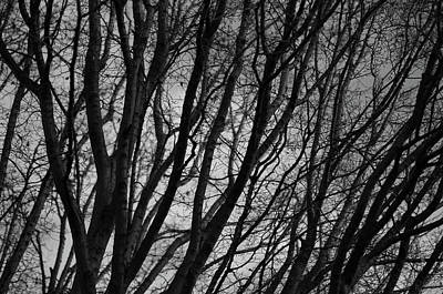 Photograph - Abstract Branches by Marilyn Wilson