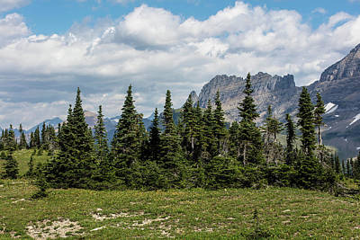Photograph - Treelike In Glacier National Park  by John McGraw
