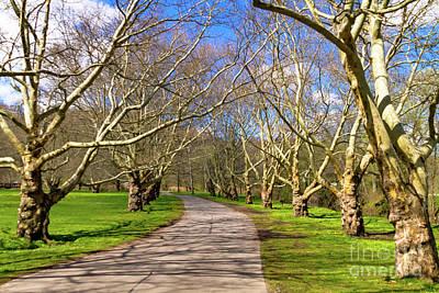 Photograph - Treelined by William Norton