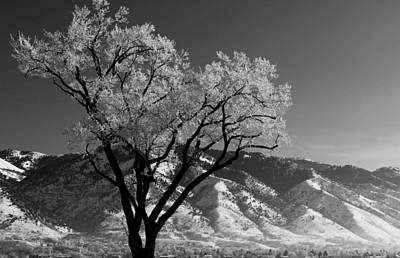 Photograph - Treendrils by David Andersen