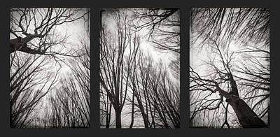 Treeology Art Print by Dorit Fuhg