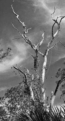 Photograph - Trees 11 15 by John Hintz