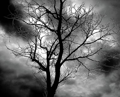 Photograph - Trees 3 by Jeff Heimlich