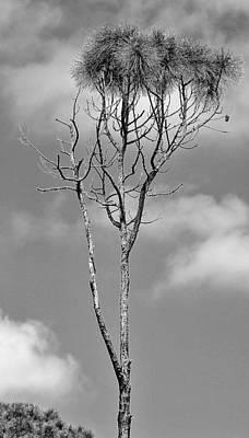Photograph - Trees 4 18 by John Hintz