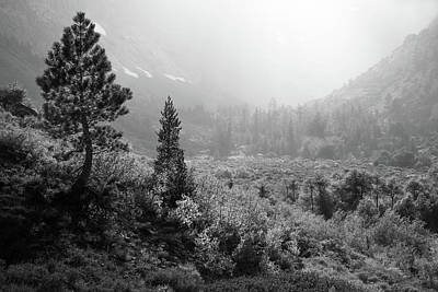 Photograph - Trees Above Parker Lake by Alexander Kunz