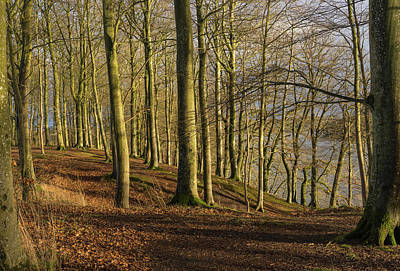 Photograph - Trees Along The Hald So Viborg Commune In Denmark by Jebulon