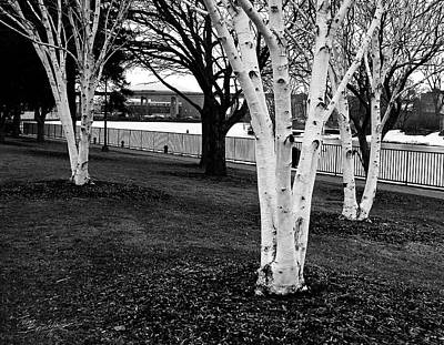 Photograph - Trees Along The Waterfront by Tom Brickhouse