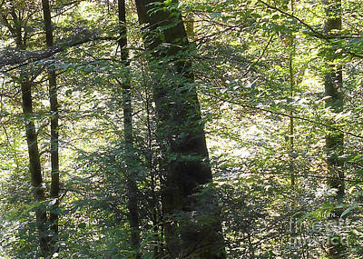 Photograph - Trees Among The Light Bingham Falls Vermont Detail by Felipe Adan Lerma