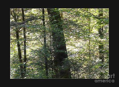 Photograph - Trees Among The Light Bingham Falls Vermont Detail Poster by Felipe Adan Lerma