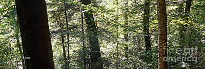 Photograph - Trees Among The Light Bingham Falls Vermont Panorama by Felipe Adan Lerma