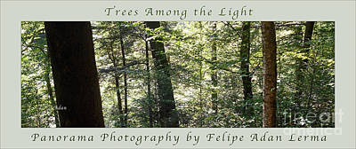 Photograph - Trees Among The Light Bingham Falls Vermont Panorama Poster by Felipe Adan Lerma