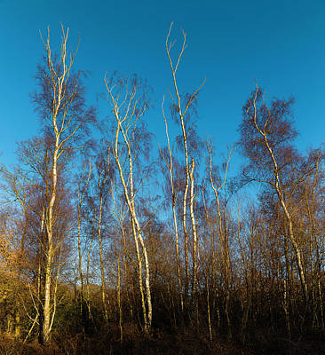 Photograph - Trees And Blue Sky by Stewart Marsden