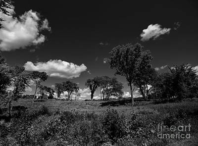 Photograph - Trees And Clouds by Jimmy Ostgard