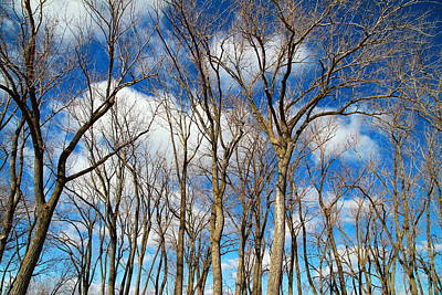 Photograph - Trees And Clouds by Valentino Visentini