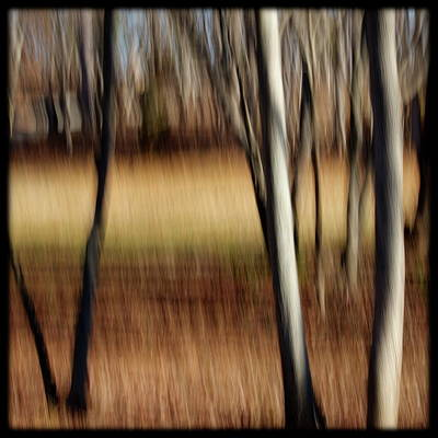 Photograph - Trees And Field by Alan Skonieczny